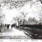 【15】桜花のトンネル
